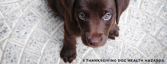 3 Thanksgiving Dog Health Hazards